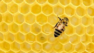 La miel y el ser vivo más infravalorado - La Receta Dispersa - DelSol 99.5 FM