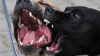 Cotryba definió cuáles son los perros potencialmente peligrosos - Entrevistas - DelSol 99.5 FM