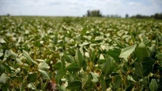 Buen año para la soja si las lluvias no complican la cosecha - Entrevistas - DelSol 99.5 FM
