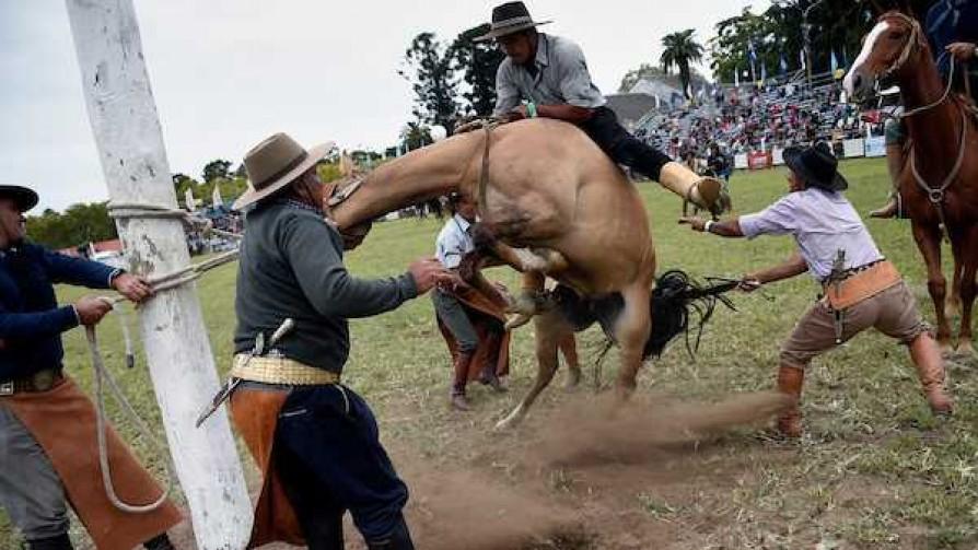 Murió un caballo tras una jineteada en el Prado; animalistas protestaron - Titulares y suplentes - La Mesa de los Galanes | DelSol 99.5 FM