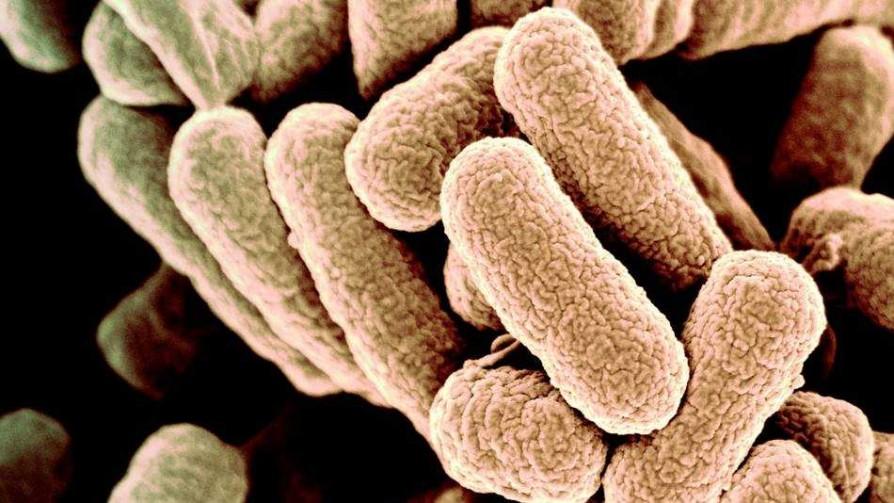 Una bacteria totalmente artificial: ¿estamos frente a una nueva forma de vida? - Gianfranco Grompone - No Toquen Nada | DelSol 99.5 FM