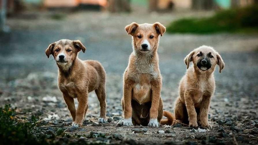 ¿Qué raza de perro es cada integrante del programa? - Sobremesa - La Mesa de los Galanes   DelSol 99.5 FM