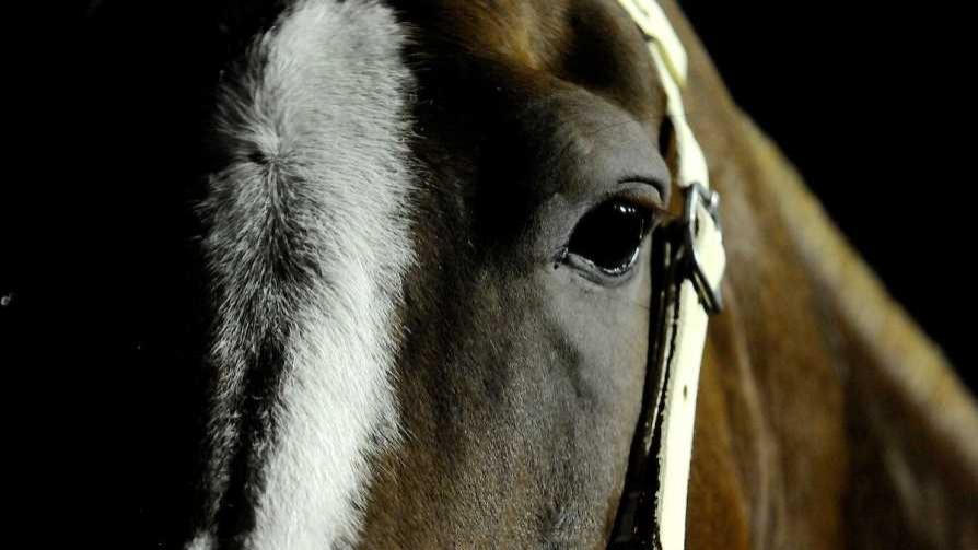 Denuncian mercado negro en frigoríficos que faenan caballos - Carolina Domínguez - Doble Click | DelSol 99.5 FM
