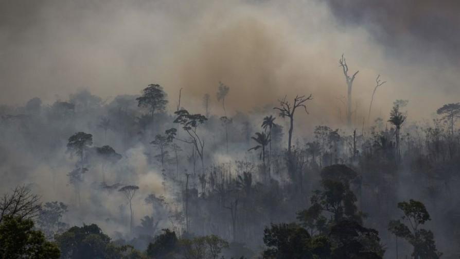 ¿Qué está pasando en la Amazonia? Causas concretas y simbólicas - Denise Mota - No Toquen Nada | DelSol 99.5 FM