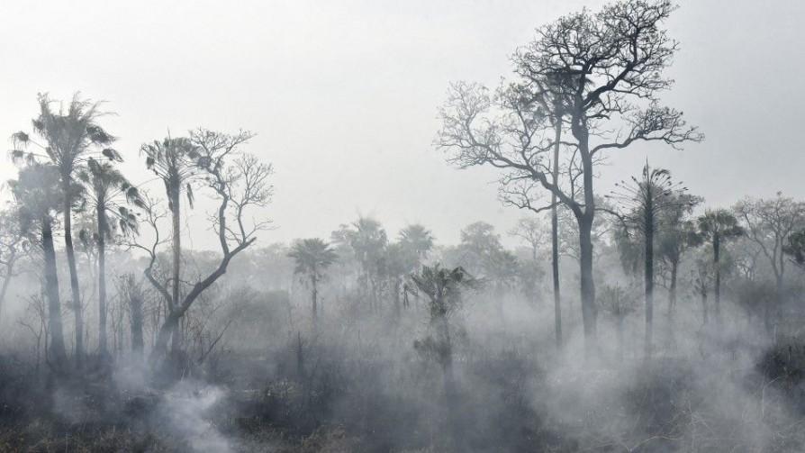 Ayuda de NatGeo a maestras: la Amazonia no es el pulmón del mundo - Audios - No Toquen Nada | DelSol 99.5 FM
