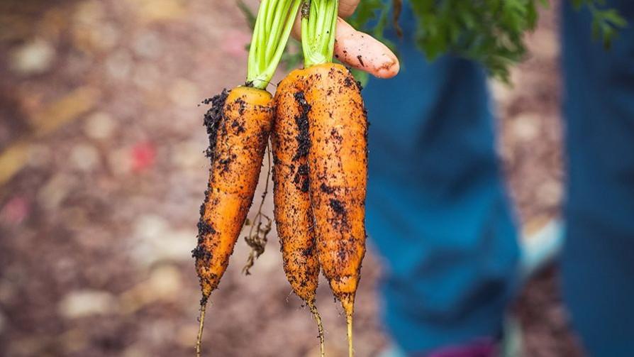 La engañosa historia de la zanahoria - La Receta Dispersa - Quién te Dice | DelSol 99.5 FM