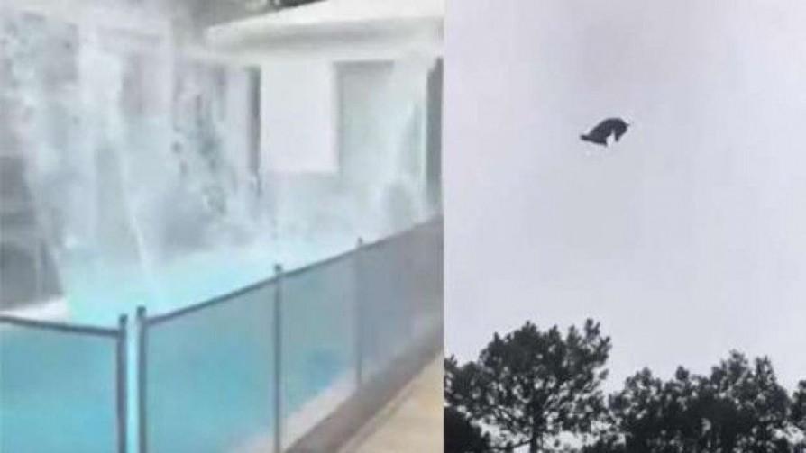 El cordero en la piscina y la crítica a Lacalle por la llegada de argentinos - Columna de Darwin - No Toquen Nada | DelSol 99.5 FM