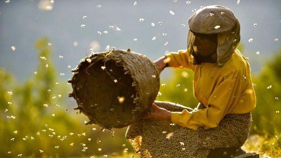 Honeyland: miel macedonia en los Oscar - La Receta Dispersa - Quién te Dice | DelSol 99.5 FM