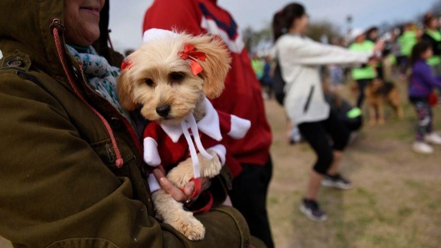 Perros que fueron moda - La Charla - La Mesa de los Galanes | DelSol 99.5 FM