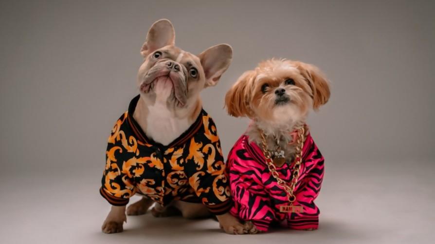 Los perros como hijos  - Manifiesto y Charla - Pueblo Fantasma | DelSol 99.5 FM