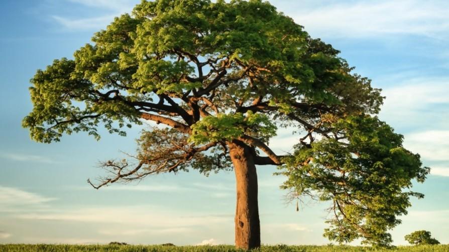 ¿Cuántos lapices se pueden hacer de un árbol?  - Sobremesa - La Mesa de los Galanes | DelSol 99.5 FM