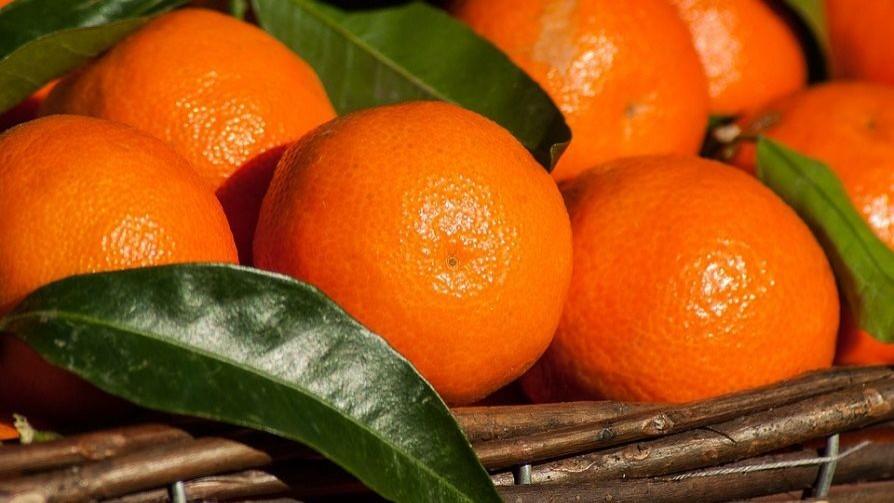 De mandarinas y tangerinas - Al Plato - Quién te Dice | DelSol 99.5 FM