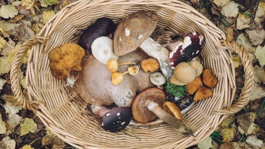 Nuevas crónicas del reino de los hongos - La Receta Dispersa - Quién te Dice | DelSol 99.5 FM