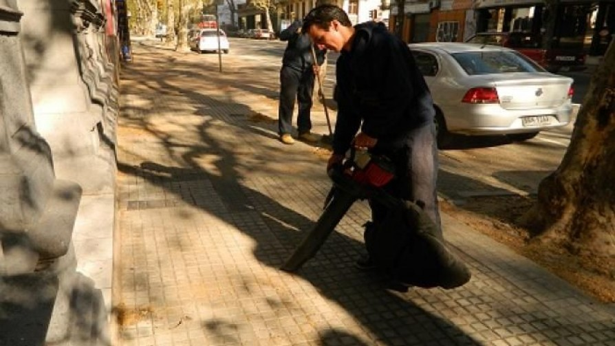 ¿Cuántos kilos de pelusas de los plátanos hay hoy en la ciudad de Montevideo? - Sobremesa - La Mesa de los Galanes   DelSol 99.5 FM