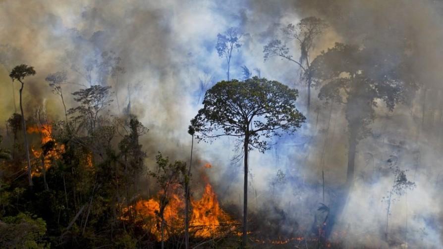 Activistas crean en Brasil plataforma de monitoreo ambiental  - Denise Mota - No Toquen Nada | DelSol 99.5 FM