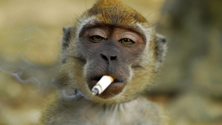 Seamos más monos - Manifiesto y Charla - Pueblo Fantasma | DelSol 99.5 FM