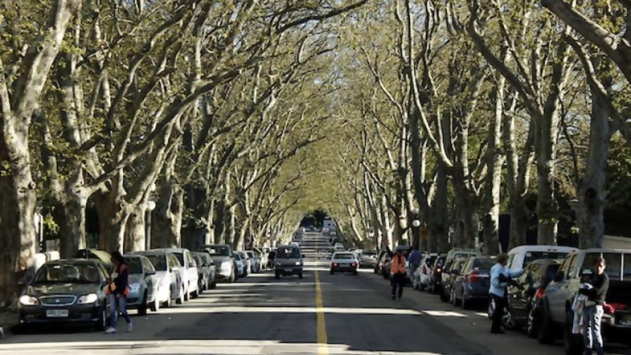 ¿Cuánto cuesta sacar un árbol en la ciudad? - La Charla - La Mesa de los Galanes   DelSol 99.5 FM