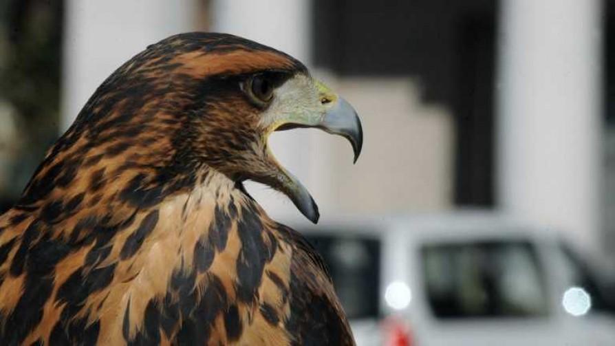 La inteligencia de las aves y por qué se quedan en la ciudad - Entrevistas - No Toquen Nada | DelSol 99.5 FM