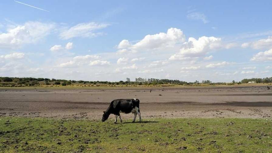 El impacto de la Niña en la soja y la ganadería - Entrevistas - No Toquen Nada | DelSol 99.5 FM