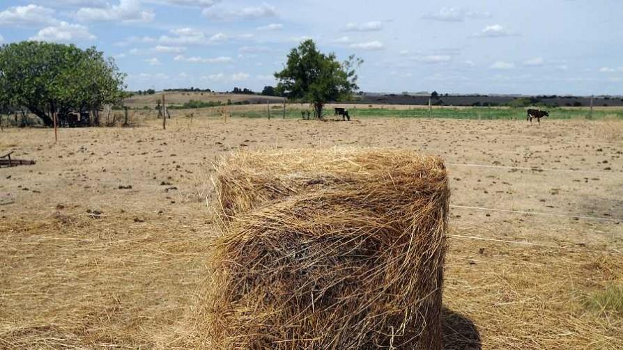 La sequía en primera persona desde Young - Entrevistas - No Toquen Nada | DelSol 99.5 FM