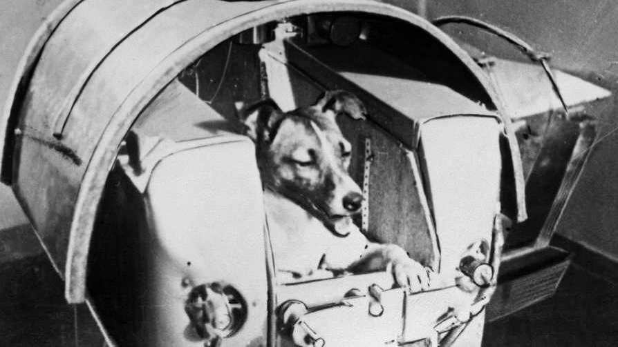 La indignación de Darwin por la ausencia de Laika en el Museo Cosmonáutico ruso - Columna de Darwin - No Toquen Nada | DelSol 99.5 FM