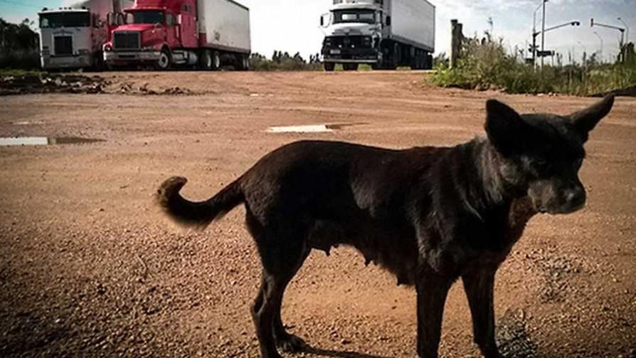 Los veterinarios y su propuesta para perros potencialmente peligrosos - NTN Concentrado - No Toquen Nada | DelSol 99.5 FM