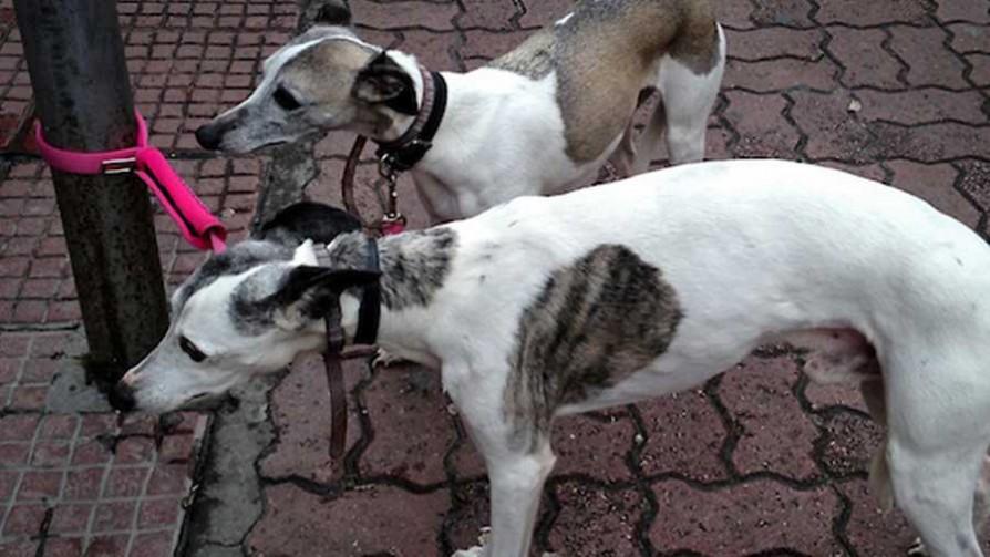 Los veterinarios y sus propuestas para los perros potencialmente peligrosos - NTN Concentrado - No Toquen Nada | DelSol 99.5 FM