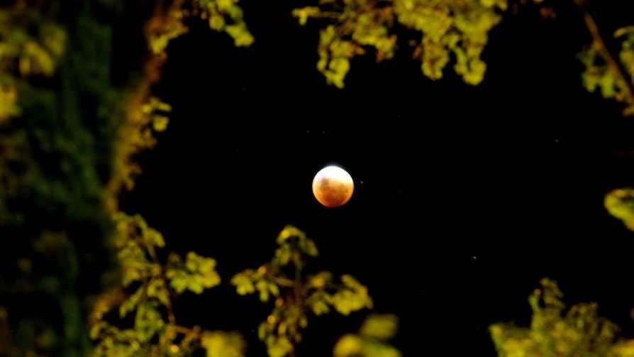 Darwin, Arjona y la luna de sangre - Columna de Darwin - No Toquen Nada | DelSol 99.5 FM