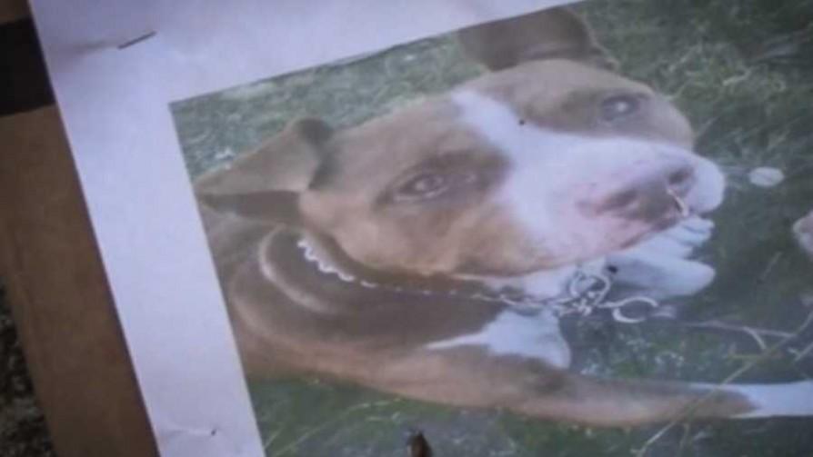 El caso del perro Roko - Cambalache - La Mesa de los Galanes | DelSol 99.5 FM