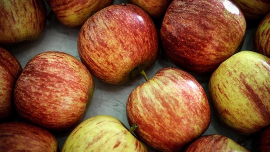 La confusión sexual de insectos que eliminó los gusanos de la manzana - NTN Concentrado - No Toquen Nada | DelSol 99.5 FM