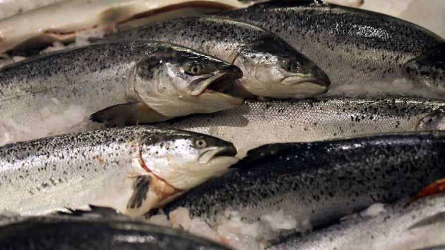 La grieta del salmón en Argentina - Facundo Pastor - No Toquen Nada | DelSol 99.5 FM