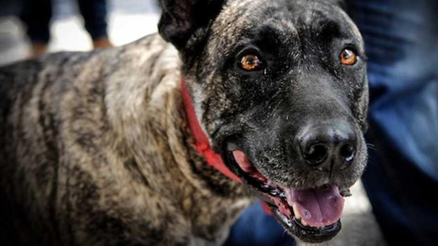 Los perros peligrosos y el odio hacia Salzburgo - NTN Concentrado - No Toquen Nada | DelSol 99.5 FM